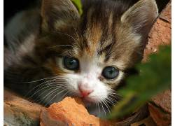 面对,猫,动物610459