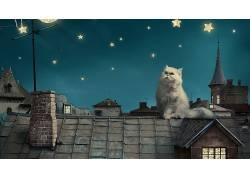 波斯猫,猫,艺术品,明星,动物,屋顶397162