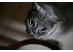 面对,眼睛,动物,猫,抬头看501051