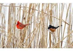 性质,动物,鸟类475212