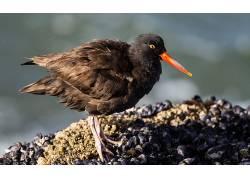 性质,动物,鸟类560761