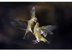 性质,动物,鸟类576042