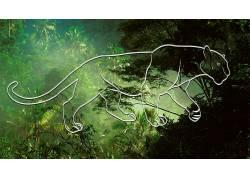 动物的眼睛,丛林669975