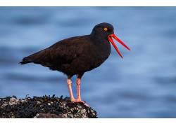 性质,动物,鸟类607523