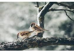 性质,动物,鸟类628427