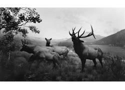 性质,动物,鹿,单色,树木,草,丘陵,云,杉本弘,麋鹿625178