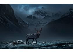 性质,动物,鹿,山,红眼睛,数字艺术,树木,森林,云,晚425574