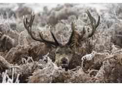 性质,动物,鹿479288