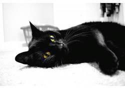 猫,动物,单色,摄影621375