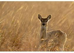 性质,动物,鹿554158