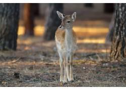 性质,动物,鹿555820
