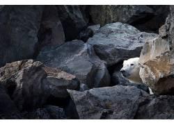北极熊,动物549650