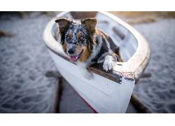 船,狗,动物569883