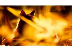 猫,动物,哺乳动物388962