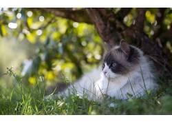 猫,动物,哺乳动物388964