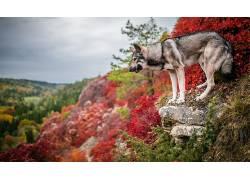 华美,性质,狗,在户外,动物573153