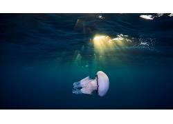 海蜇,水下,动物,太阳光线439952