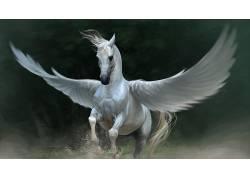 飞马,马,翅膀,动物397055