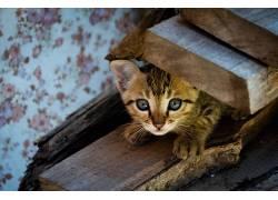 猫,动物,小猫552697