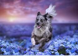 性质,华美,狗,植物,花卉,动物581489