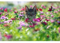 华美,猫,动物,植物,花卉590198