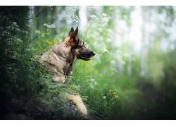 性质,在户外,动物,狗539636