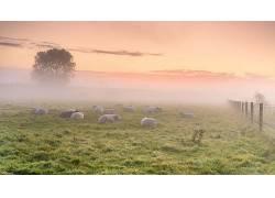 华美,绿色,薄雾,阳光,领域,天空,羊,动物570086