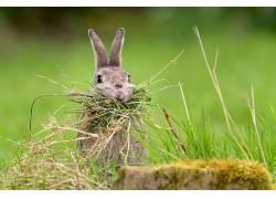 餐饮,动物,兔635205