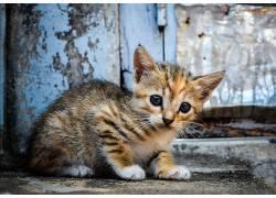 猫,动物,小猫552698