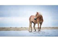马,动物,性质527439