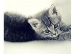 猫,动物,小猫568610
