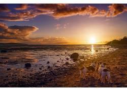 性质,天空,阳光,狗,动物569697