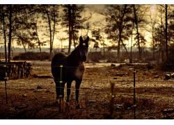 马,动物,篱笆,树木378614