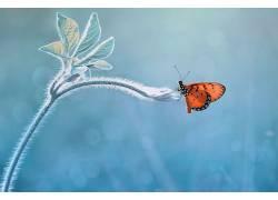 性质,宏,动物,昆虫,植物546037