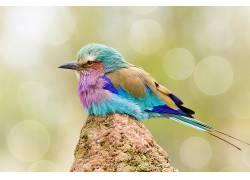 华美,鸟类,动物,背景虚化525088