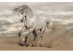 马,动物,野生动物430235