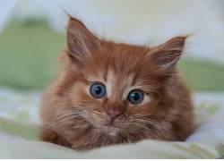 猫,动物,小猫647020