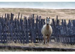 马,动物374709