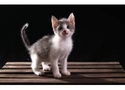 猫,动物,小猫649728