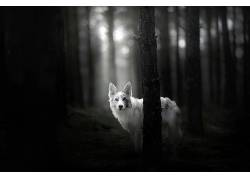 单色,动物,狗479904