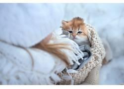猫,动物,小猫663094