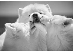 单色,狗,动物622054