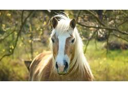 马,动物397202