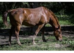 马,动物471792