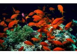 热带鱼,动物397300