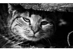 单色,猫,动物470408