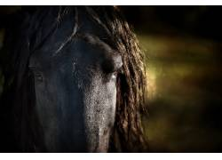 马,动物486476