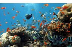 热带鱼,动物397301