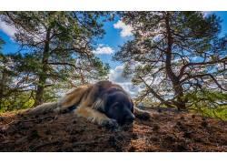 性质,树木,动物,狗582894