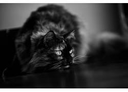单色,猫,动物493488